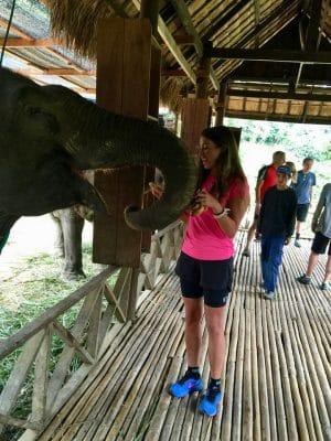 Passeio ao Elephant Village & Sanctuary, Luang Prabang - Laos
