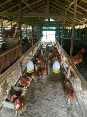 Ovos diretamente da granja no Six Senses Yao Noi, Tailândia