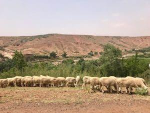 High Atlas Mountain, Marrocos
